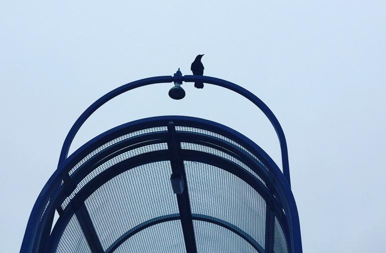 birds-are-smart
