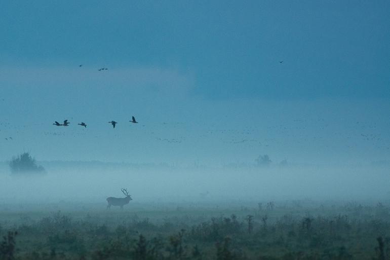 migrating-birds-dusk