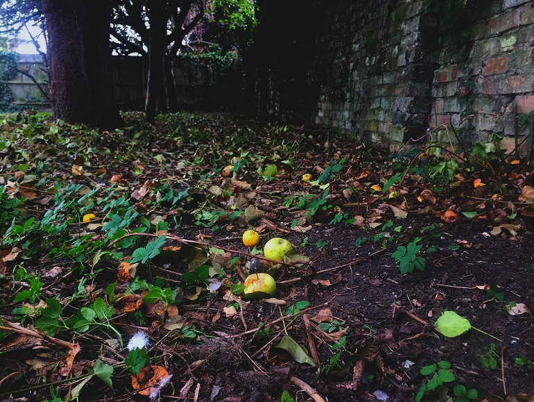 apples scattered on the ground
