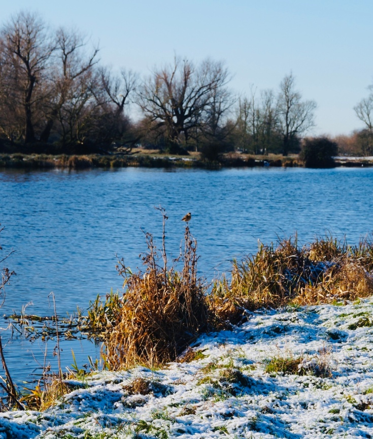 snow-bird-winter-walk-river-ouse-ely